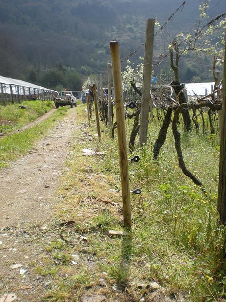 cinghiali reti elettrificate parco castelli romani