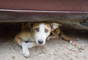 Cani randagi: il Comune di Velletri li combatte con una massiccia campagna di sterilizzazione