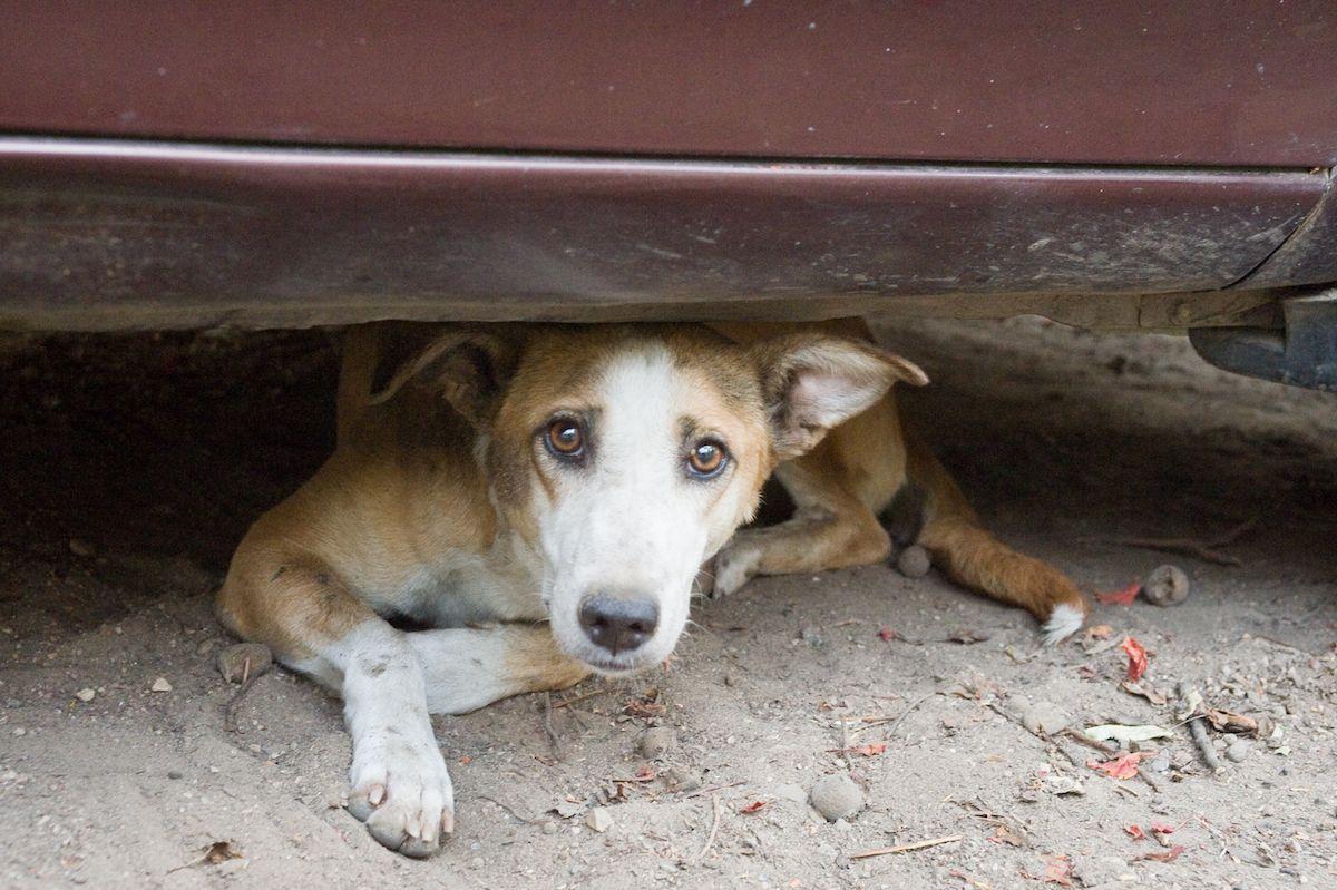comune velletri cane sgambatura villa area