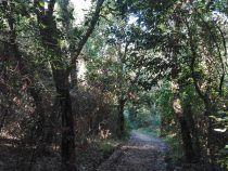 Il Parco dei Castelli Romani gestisce la riserva naturale della Sughereta di Pomezia