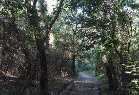 Condizioni meteo avverse: i parchi pubblici di Velletri restano chiusi fino a domenica