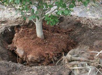 alberi messi a dimora frascati