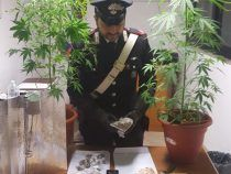 Coltivava droga in casa ad Albano, arrestato dai Carabinieri della Compagnia di Castel Gandolfo