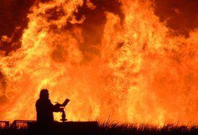 Maxi incendio ad Albano: ristorante completamente distrutto e deceduti anche tre cuccioli e un cane da caccia