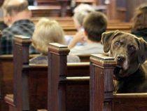 Si può entrare in Chiesa col cane? A Genzano è scontro tra parroco e animalisti