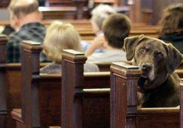 cane in chiesa genzano