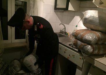 frascati droga carabinieri arresti