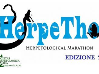 workshop herpetologico castelli romani