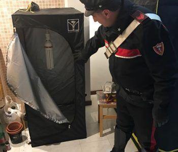 droga carabinieri albano piantagione di canapa