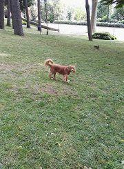 la spinosa ambiente cani