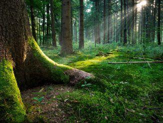 bosco Monte