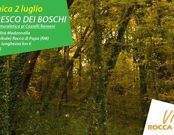 Rocca boschi