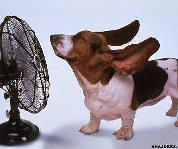 cani caldo