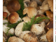 Sagra fungo porcino rocca priora