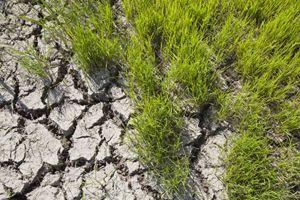 siccità venatoria