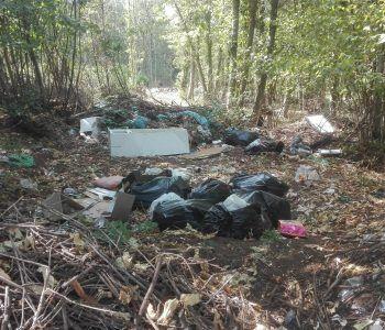 rifiuti selvaggio