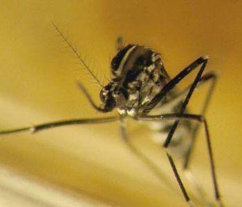 zanzare Ciampino