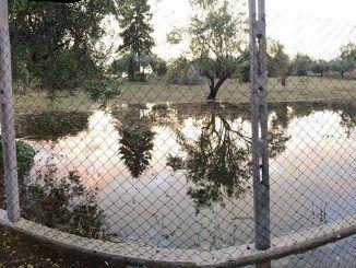 Campo grande velletri perdita idrica
