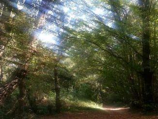 Ferentano bosco