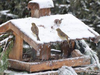 aiutare uccelli inverno