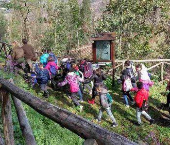 """Promossi numerosi eventi per la giornata di """"Parco Anch'io"""", un vero successo evidenzia il presidente del Parco regionale dei Castelli Romani, Sandro Caracci"""