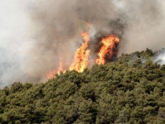 Lettera dalla Regione Lazio ai Sindaci per prevenzione incendi