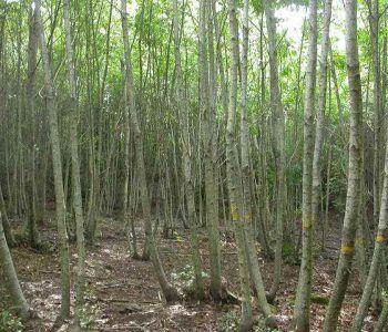 Genzano di Roma, avviso asta pubblica per boschi cedui di Castagno