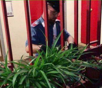 Tor Bella Monaca, fermate sei persone dai Carabinieri per possesso di droga e denaro contante