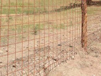 Prevenire i danni della fauna selvatica, reti elettrosaldate al Parco Castelli Romani