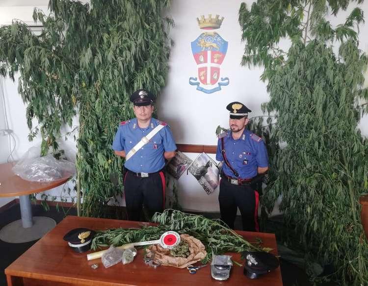 particolare marijuana sequestrata