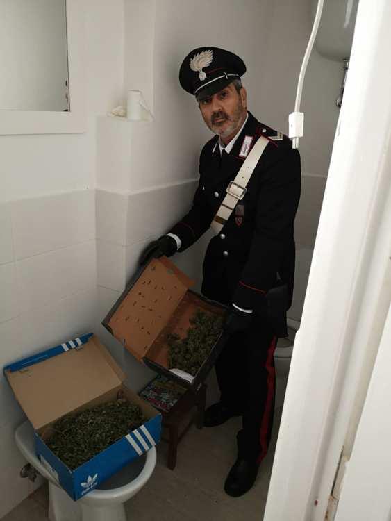 parte della marijuana sequestrata