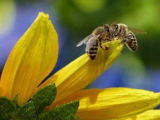 corso formativo sull'apicoltura