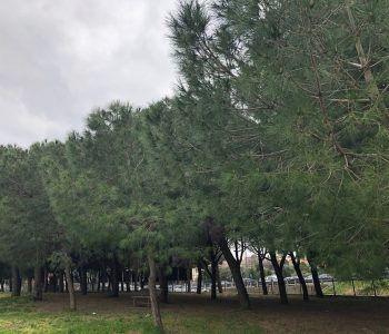 natura alberi